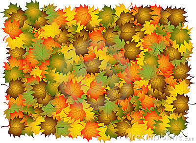 Composite of autumn  leaves