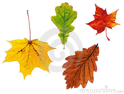 Composite  of various autumn leaves