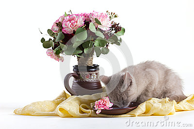 Composition of a cat and flowers