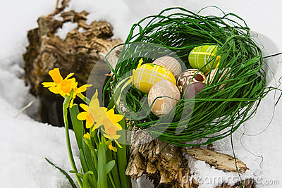 Painted Easter eggs and yellow iris flowers in the snow