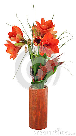 Composition en automne des fleurs d 39 amaryllis photo stock for Les fleurs amaryllis