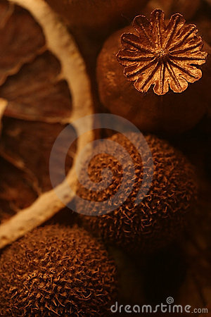 Free Composition Of Dried Flowers And Fruit  Stock Photography - 19212232