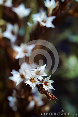 Free Composition Of Dried Flowers On A Dark Background With The Use Of Macro Photography Royalty Free Stock Image - 78565316