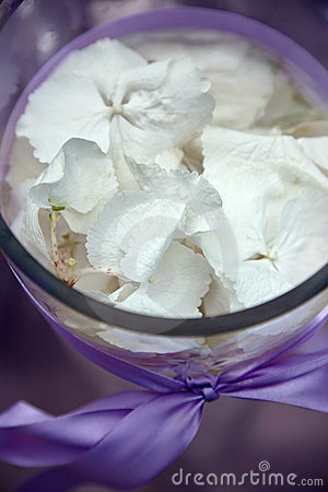 Composition with orchid petals