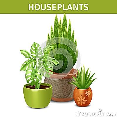 composition r aliste en plantes d 39 int rieur illustration de vecteur image 59075613