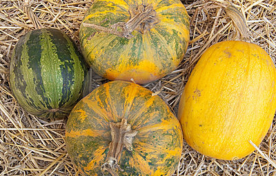 Composition from various pumpkins and straw