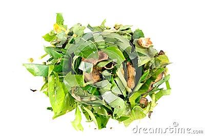 Compost plant organic fertilizer