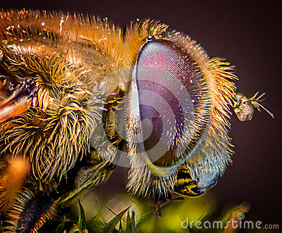 Compound fly eye macro