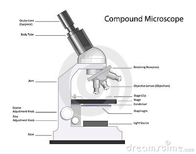 Microscopes Labeled image information