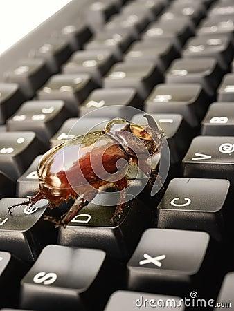 Computer bug 2