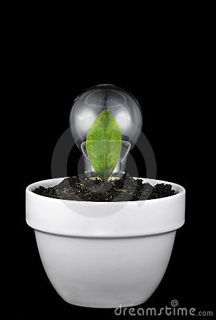 Concept of growing green ideas.