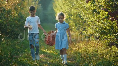 Little girl and her brother carry basket along beautiful nature. Boy is eating red apple. Slowmo. Slow motion. Copy. Concept happy childhood. The girl and little stock video footage