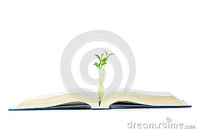 Concepto del conocimiento con los libros y la planta de semillero
