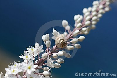 Conch on flower