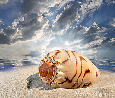 Conch shell on beach