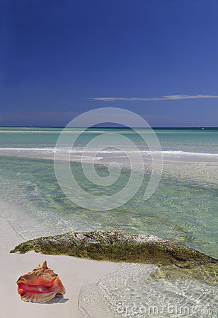Conch Shell on a Beautiful White Sand Beach