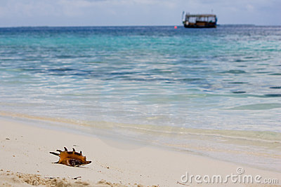 Conch shell, ocean and boat