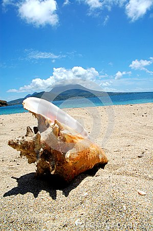 Conch shell on the sand / sea / beach /tropical