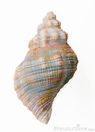 Free Conch Shell, Top View Royalty Free Stock Photography - 18198167