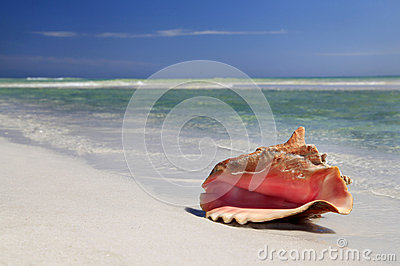 Conch Shell  on White Sand Beach