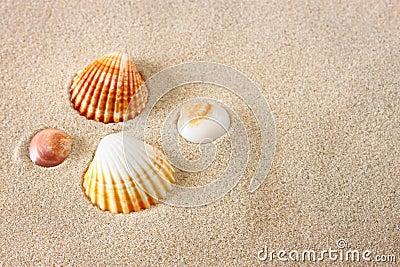 Conchiglie sulla sabbia della spiaggia immagini stock for Disegni della casa sulla spiaggia