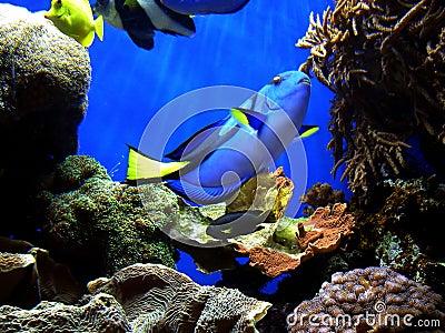 Conclusion du doris de nemo photos libres de droits - Nemo et doris ...