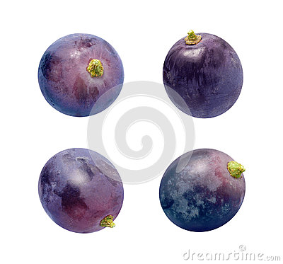Concord Grapes Isolated on white