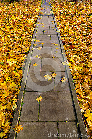 Concrete  park path through autumn leaves