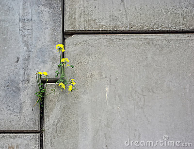 Concrete Wall with Flower