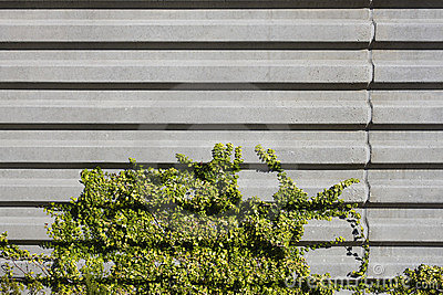 Concrete Wall and Vegetation