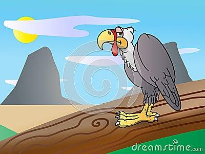 Condor bird