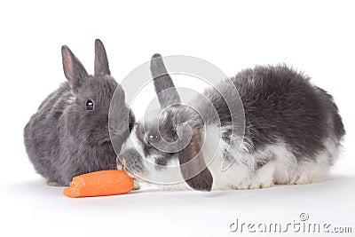 Conejito dos y una zanahoria, aislada