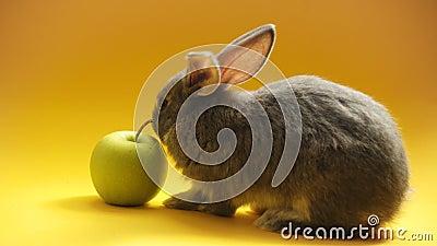 Conejo gris con manzana almacen de metraje de vídeo