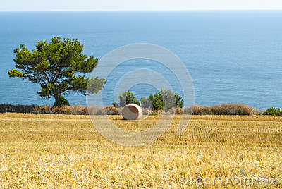Conero - Cultivated coast