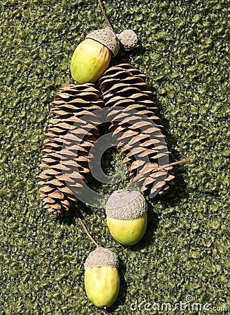 Cones and acorns