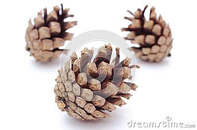 Cones do pinho no fundo branco
