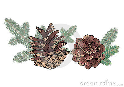Cones and spruce branches
