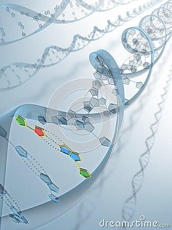 Conexión de la DNA