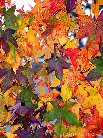 Configuration d automne