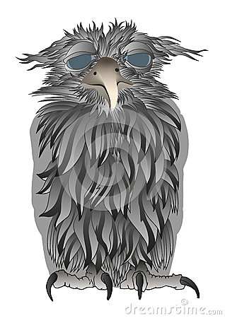 Confused old owl