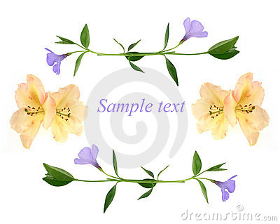 Congratulation card - flowers background