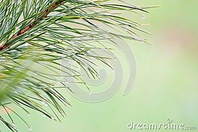 Conifer brunch