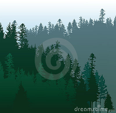 Free Coniferous Forest Stock Photography - 22552262