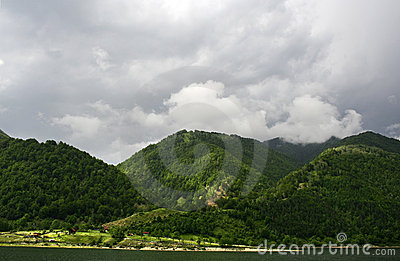 Coniferous Forest on the Mountain