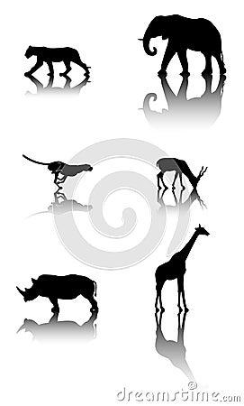 Conjunto de animales de la fauna