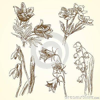 Conjunto de flores de la primavera