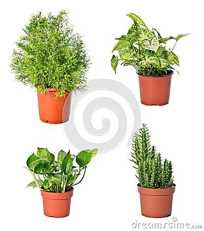 Conjunto de plantas de interior