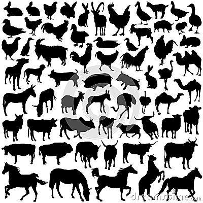 Conjunto del animal del campo