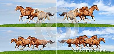 Conjunto - varia manada galopante de caballos en campo