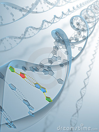 Connexion d ADN